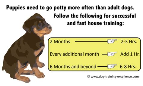 how do i house train a dog potty training a puppy in a week