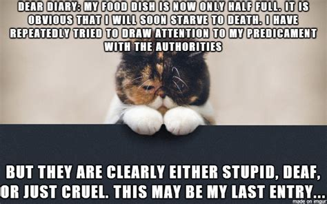 sad cat diary meme on a cold time about a half full food dish