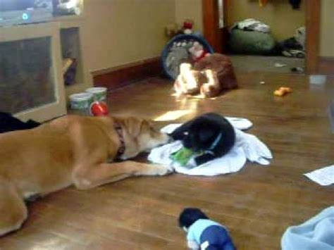 dogs 50 pounds 50 pound vs 7 pound puppy