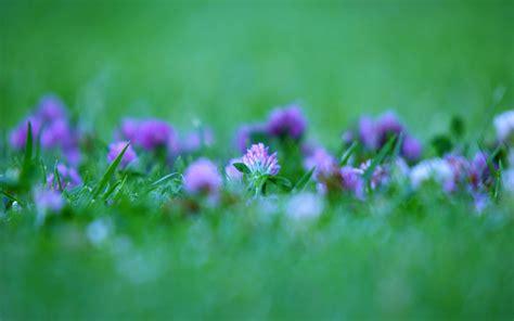 sfondi hd fiori sfondi hd fiori 70 immagini
