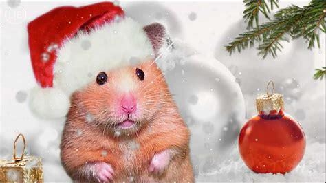 hamster mistletoe xmas hamster chipmunks chipettes kids version merry  mas youtube