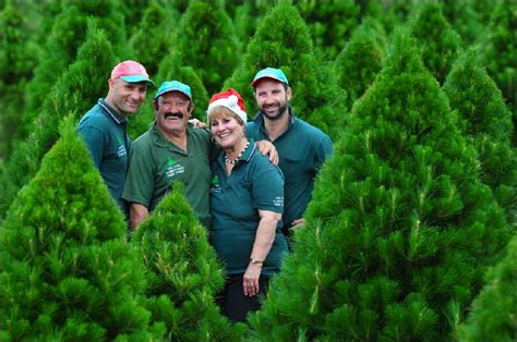 christmas tree farms in victoria melbourne