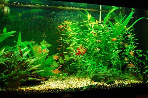 Aquarium Fish L by Freshwater Aquarium Freshwater Aquarium Talk