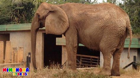 imagenes de animales zoologico sonidos de animales zoologico granja safari videos