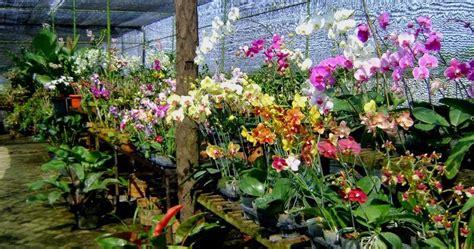 contoh kalimat ungkapan nama bagian tumbuhan  tanaman