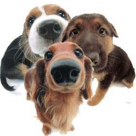 three dogs three dogs 3d1kzen