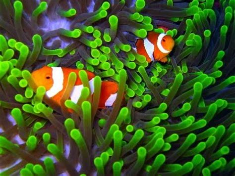 Batu Kerang Laut tourism wakatobi tourism objects
