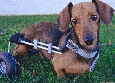 dragging back legs vote top local animal nonprofit of the month
