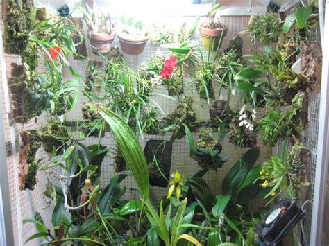i più bei fiori orchidando forum leggi argomento fioriture di alberto