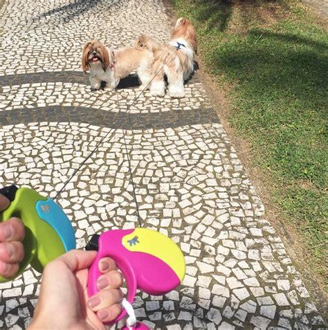 puppy land animal friendships in ferplast s best of june ferplast