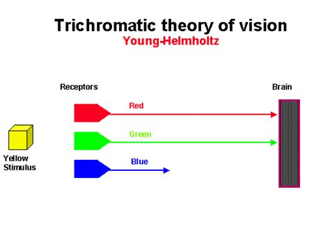 trichromatic theory of color vision psych m d helmholtz trichromatic three color