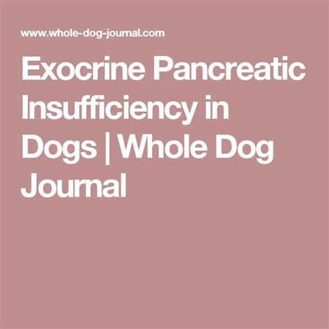 exocrine pancreatic insufficiency in dogs 17 best images about health on bone broth for dogs and homeopathic