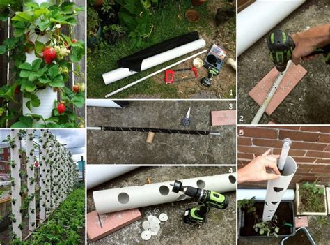 Strawberry Garden Ideas Strawberry Vertical Garden Made From Pvc Find