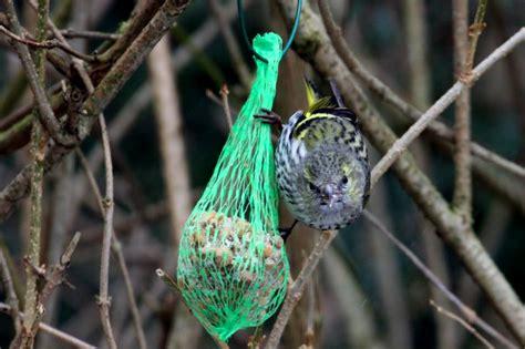 V Gel In Unserem Garten 3898 by V 246 Gel Sperlingsv 246 Gel 7 Tier Fotos Eu