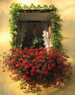imagenes de jardines en ventanas el cuidado de las plantas y el jardin plantas colgantes