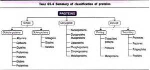 Biomolecules top 4 classes of biomolecules