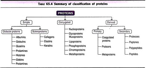 carbohydrates lipids and proteins are classified as biomolecules top 4 classes of biomolecules