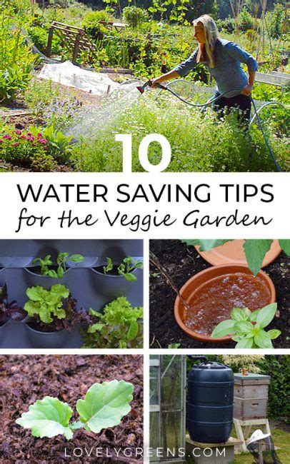 Best Time To Water Vegetable Garden by 10 Water Saving Tips For The Vegetable Garden Lovely Greens