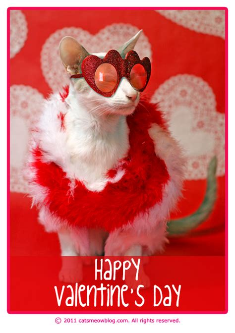 cat valentines happy valentine s day from the cat s meow catster
