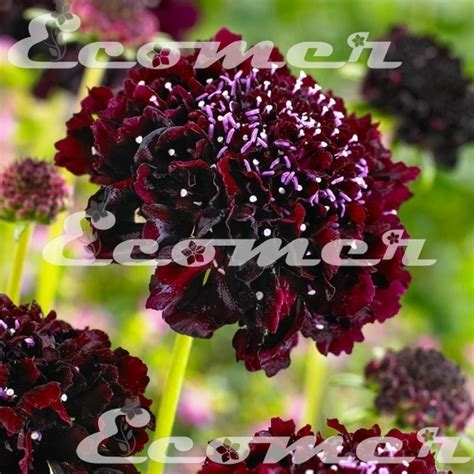 fiori per bordure giardino piante e fiori piante da giardino piante per aiuole e