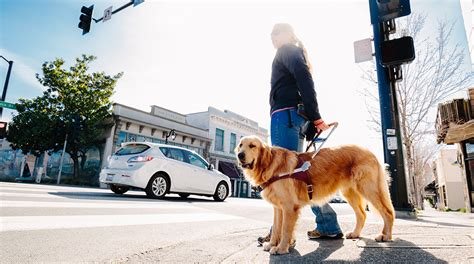 Guide Dogs For The Blind Careers