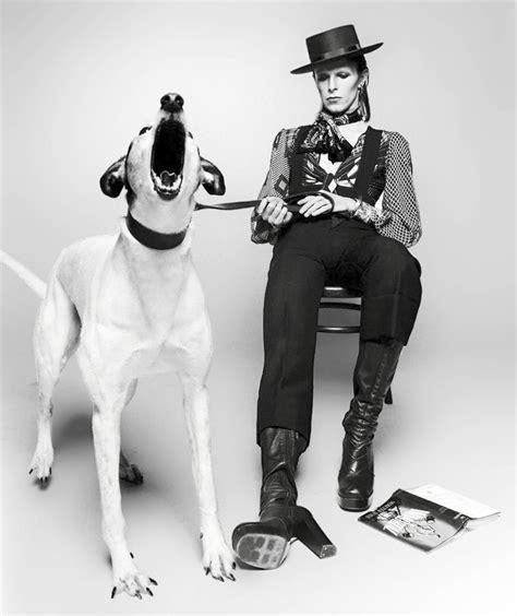 david bowie dogs david bowie is a fashion pets