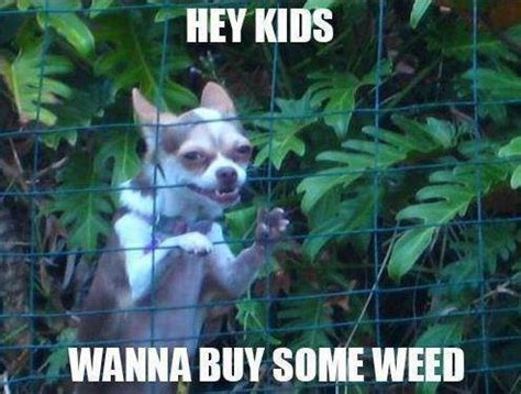 Funny Weed Memes - welcome to memespp com