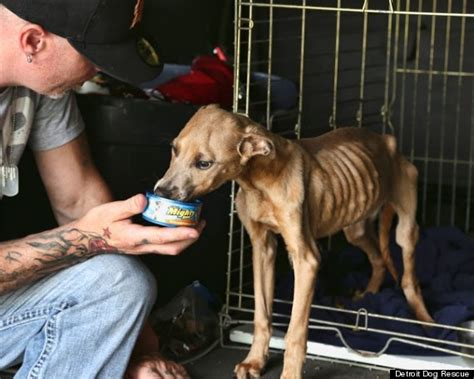 detroit s stray problem fought by rescue groups as