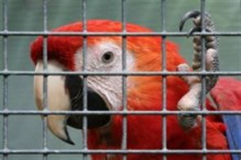 ara haltung wohnung papageien biz
