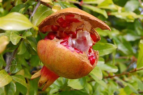 imagenes de flores que dan frutos algunas plantas flores y frutas de nuestros cos de ja 233 n