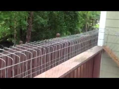 outdoor cat tunnel  sanctuary youtube