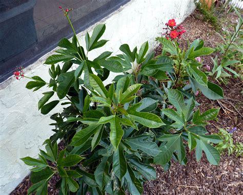 flowering shrubs in florida my florida backyard flowers are