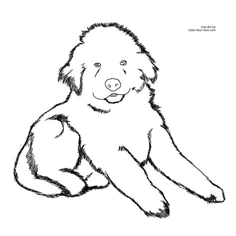 coloring pages of newfoundland newfoundland puppy coloring page