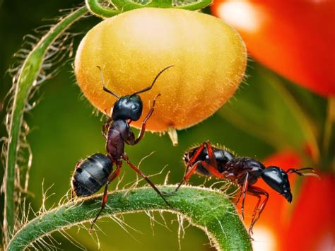 How To Get Rid Of Ants In Vegetable Garden by Vegetable Gardening With Mike The Gardener Get Rid Of