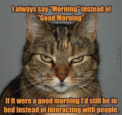 Good Morning Cat Meme - morning cat by george wright 798278 meme center