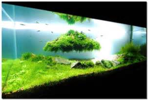 fish tank aquascape designs 28 modern fish tanks that inspire relaxation