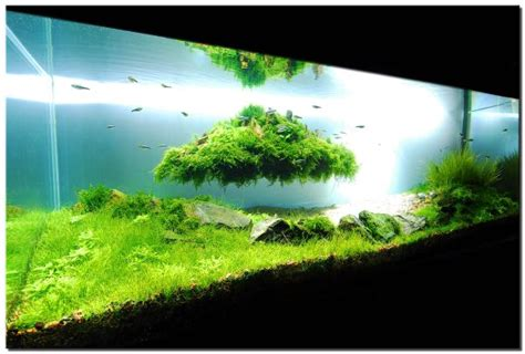 cool aquascapes stunning fish tank design that really kicks in with the