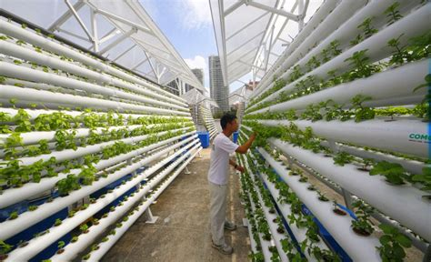 bittersweet brexit the future of food farming land vertical farming the trend for producing food