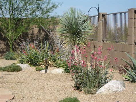landscaping for small backyard landscape design tucson az sonoran gardens inc