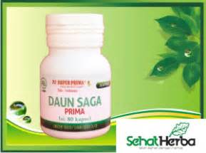Kapsul Daun Saga obat herbal daun saga sehatherba
