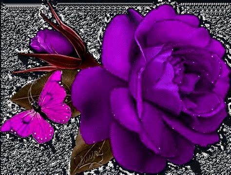 imagenes de rosas matizadas gifs animados rosas violetas imagui