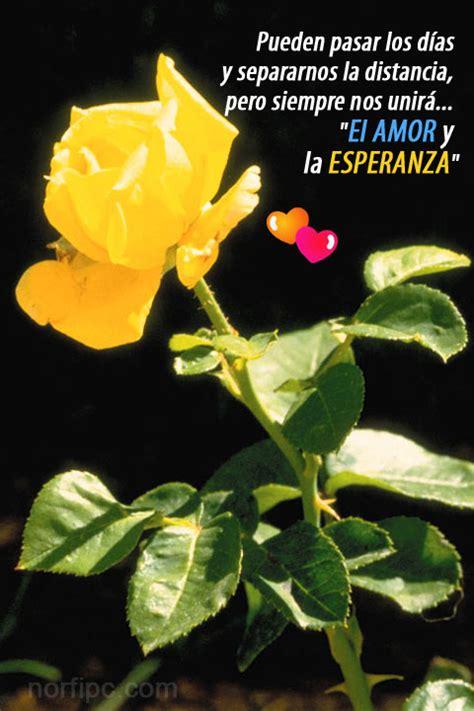 imagenes de amor y amistad gratis para celular im 225 genes de amor bonitas para el tel 233 fono celular o tableta