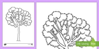 Key Stage 2 Science Primary Resources Uae Page 1 International Tree Coloring Page