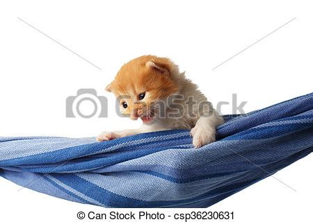 stock photos of cute red orange kitten in a hammock