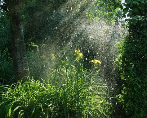imagenes de lluvia wallpaper selva del amazonas publish with glogster