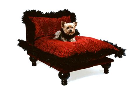 why do dogs hump their bed top 5 luxuries nyc dogs cannot live without