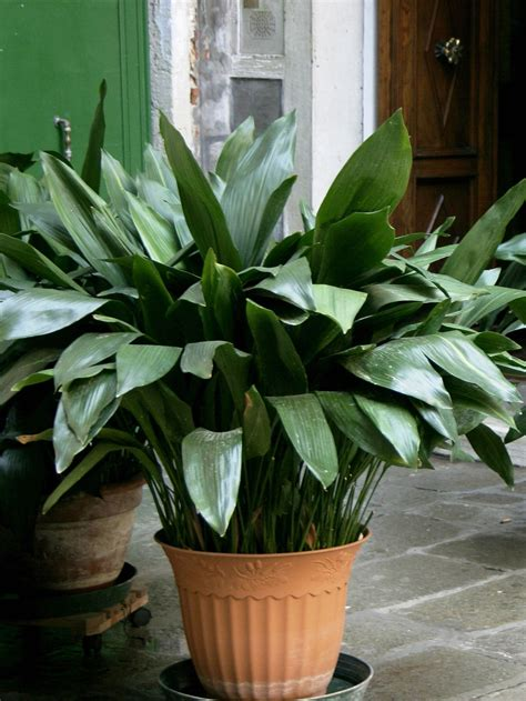 easy indoor plants 3 easy indoor plants newpro blog