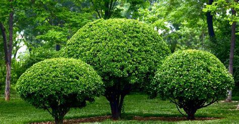 imagenes de arboles zen podar arbustos y 225 rboles en julio blog verdecora