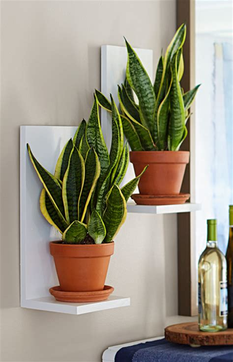 Wall Plant Shelf by Wall Mounted Plant Shelves