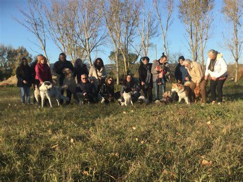 free puppies ta pizzata di raccolta fondi per l area cani di fibbiana gonews it